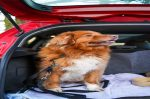 Great Tips For Traveling With Pets