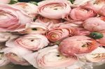 Planning Your Wedding Flowers And Decorations