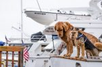 Stress Free Travel With Your Dog