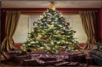 What Kind of Christmas Tree Should You Buy?
