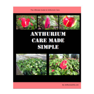 Anthurium Care Made Simple Ebook