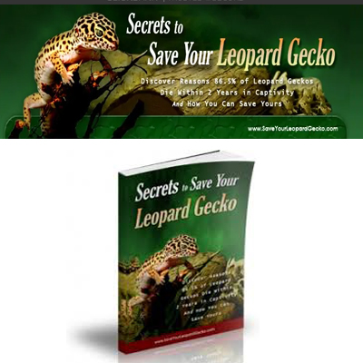 How To Save Your Leopard Gecko - Digital Guide