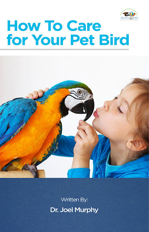 Care For Your Pet Bird