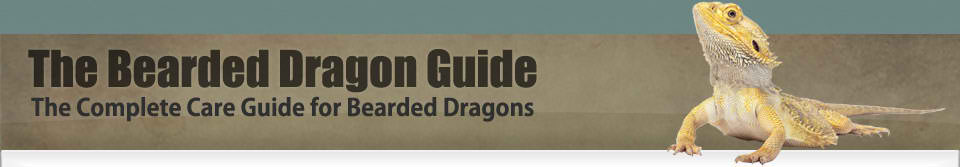 The Bearded Dragon Guide