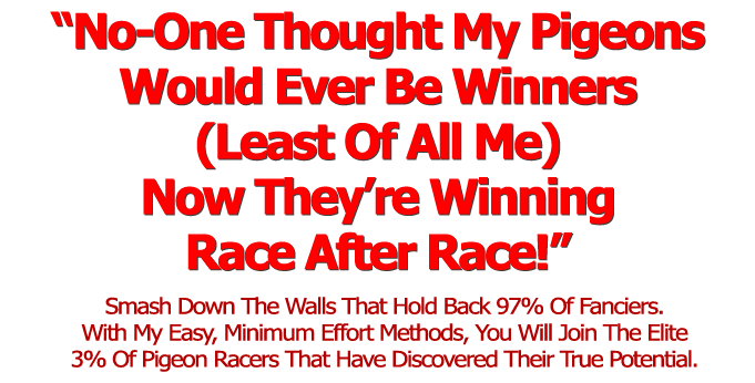 How To Race Pigeons And Make Money